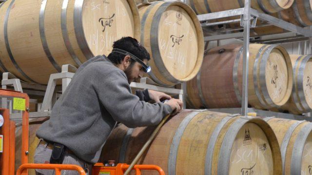 Мужчина работает с бочонками с вином