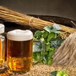 два бокала с пивом и стебли ячменя
