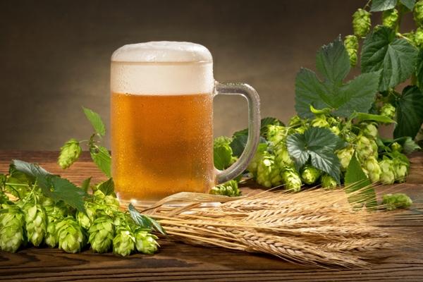 Бокал пива и хмель