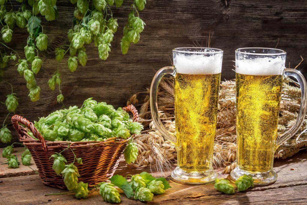 два бокала пива и хмель в корзинке
